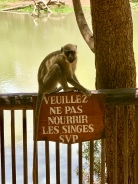 Feisty Pizza-Loving Monkeys