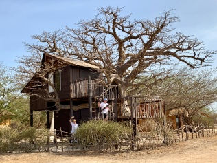 Baobab Tree House